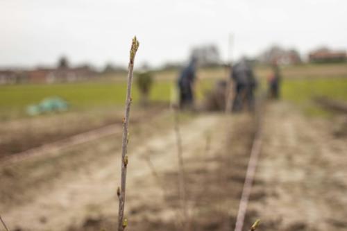 Plantdag34